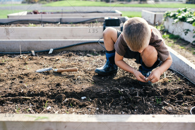 Boy planting seeds in a trench in a small raised garden