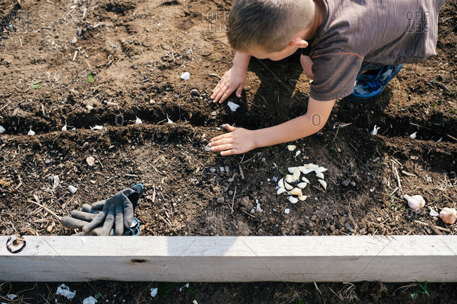 Boy covering seeds with dirt in a garden