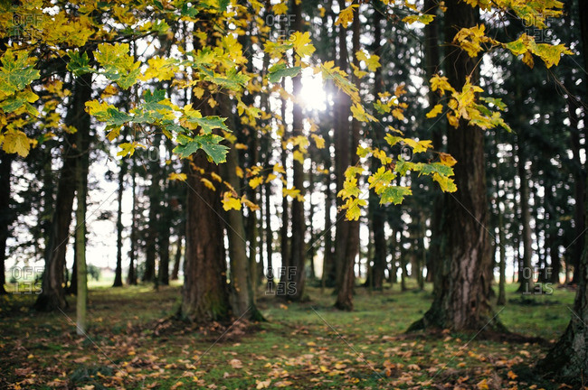 Sun shining through trees in a thicket
