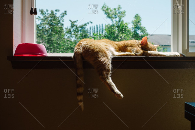 Cat sleeps in sunlight on window sill
