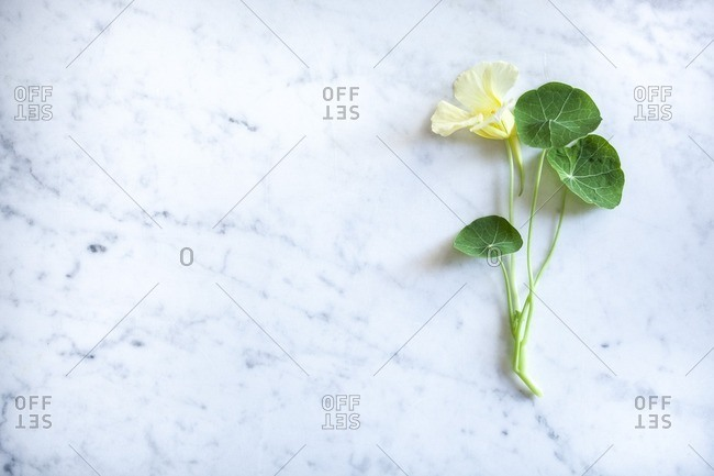 Edible yellow flower and green leaf on a marble surface