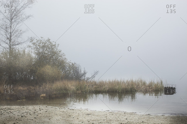 Beach and grass at the edge of a lake on a foggy morning