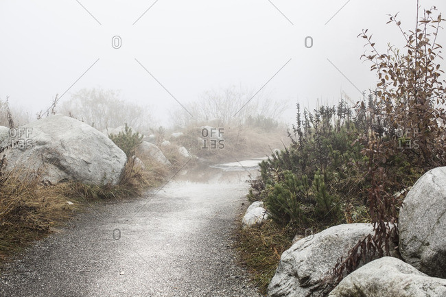 Rural dirt path dusted in snow on a foggy morning