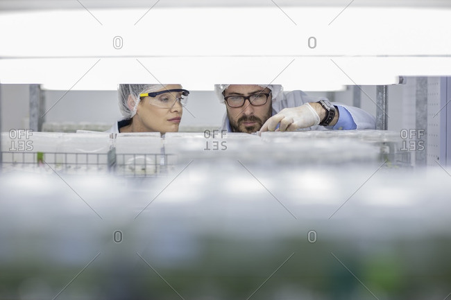 Scientists working in lab wearing protective clothing looking at samples