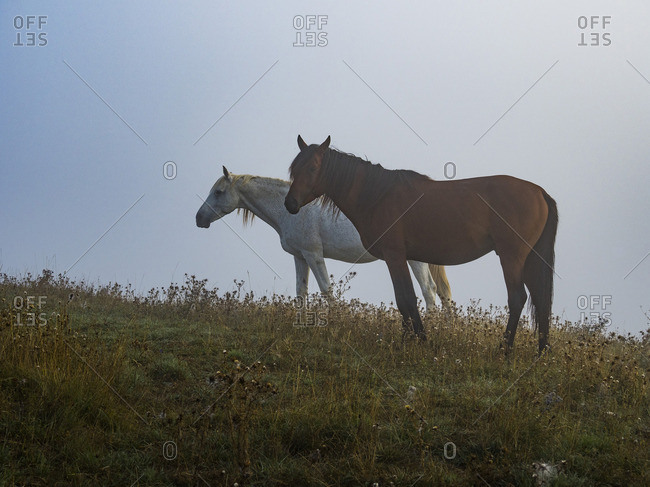 Italy- Umbria- Apennines- Horses in the fields