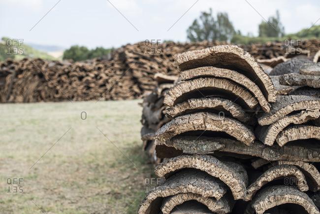 Stack of cork tree barks