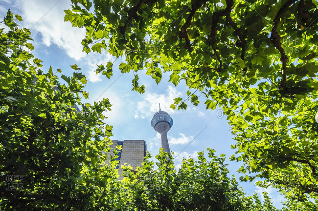 Germany- Duesseldorf- view to Rhine Tower through foliage