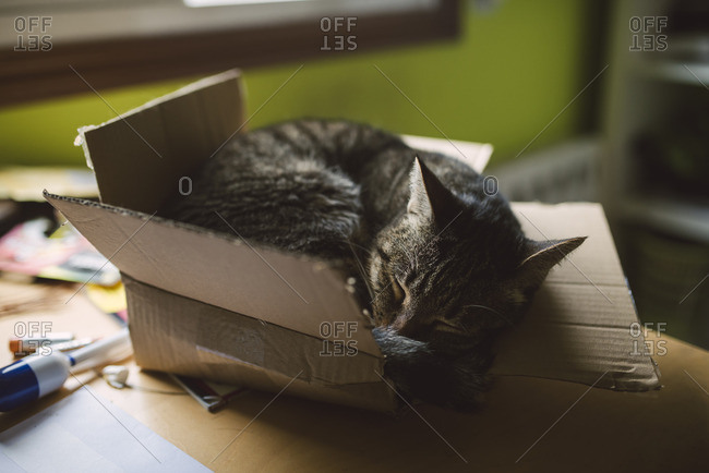 Tabby cat sleeping inside a small cardboard box at home