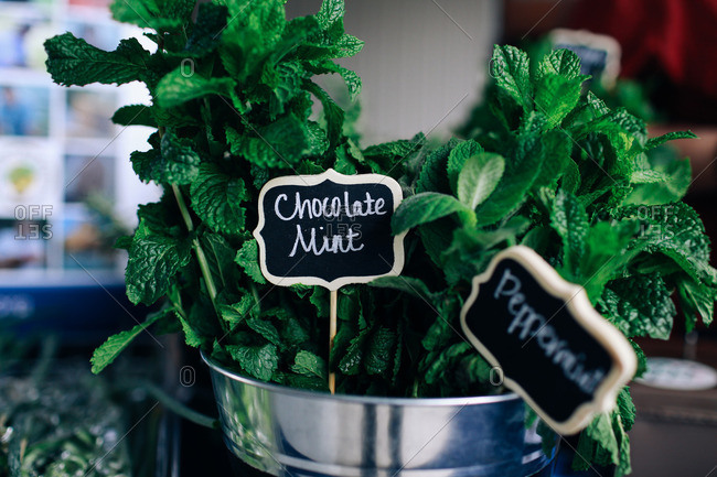 Varieties of mint for sale in a metal pail