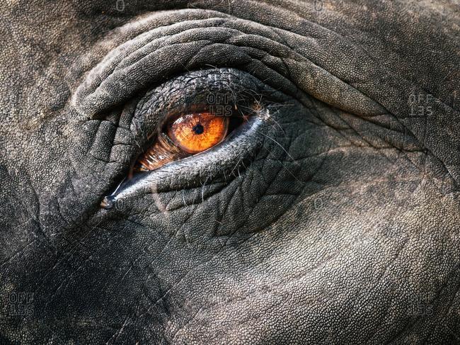 Close up of an elephant's eye