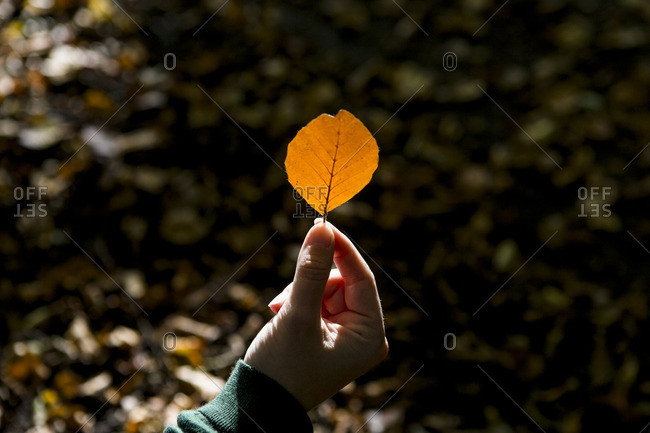 A woman holding an orange leave in warm autumn sunlight in thr Amsterdamse Bos forest