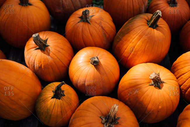 Variety of harvested orange pumpkins in dappled light