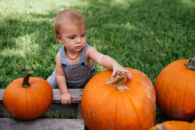 Baby girl choosing a pumpkin at a patch