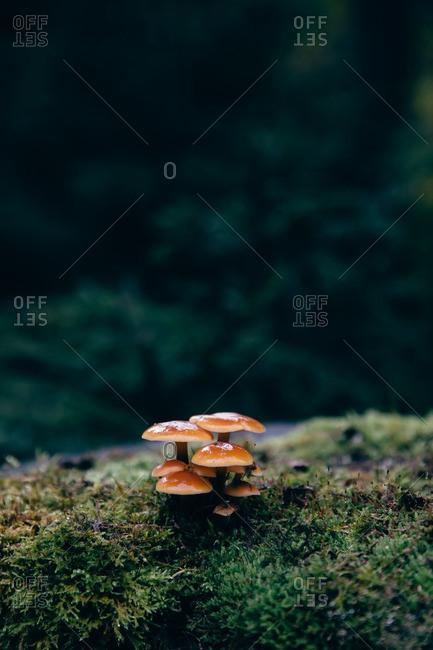 Cluster of mushrooms growing in the wild