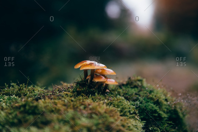 Small cluster of mushrooms growing in the wild
