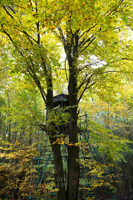 Hunting blind in a tree in the forest