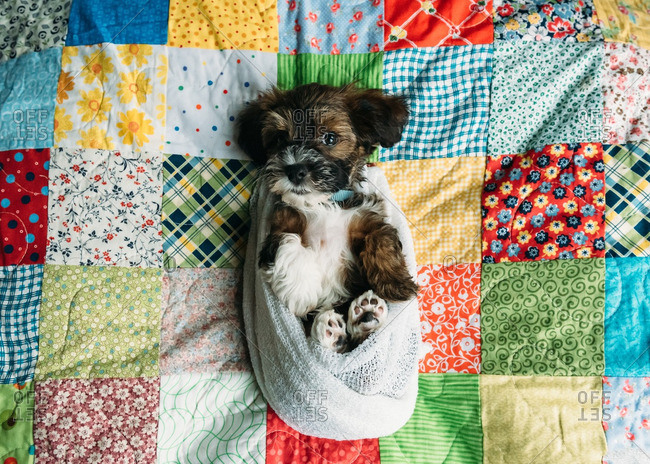 Puppy swaddled in cloth