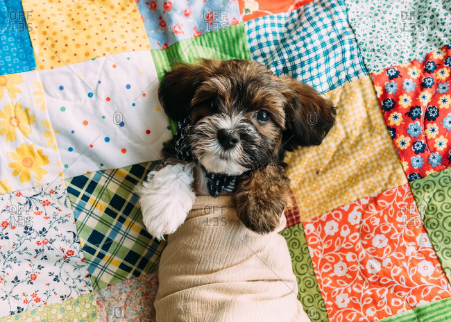 Puppy in cloth on a quilt