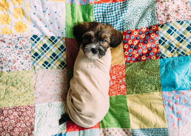 A puppy swaddled in cloth
