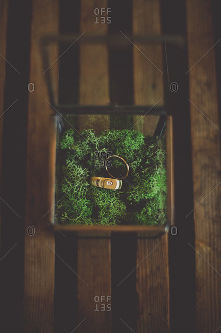 Wedding rings in a moss filled box