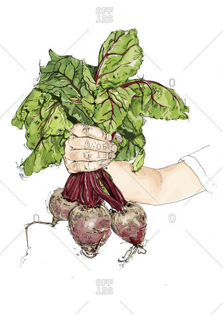 Hand holding a bunch of beets
