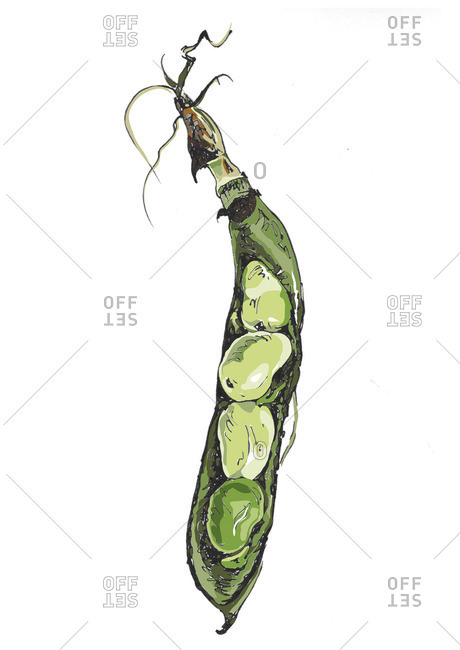 An open peapod on white background