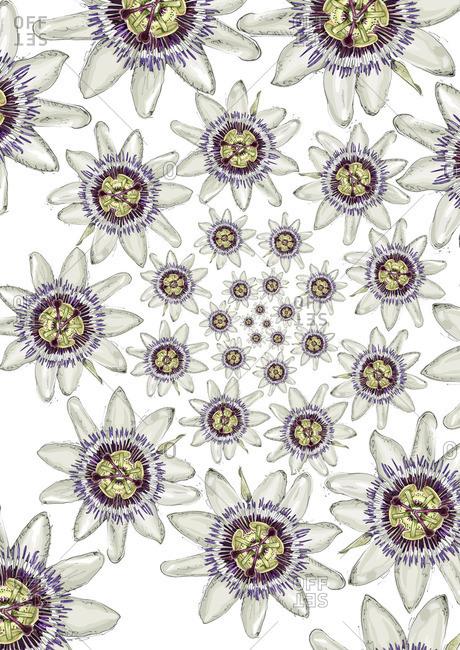 Flowers in a spiral arrangement