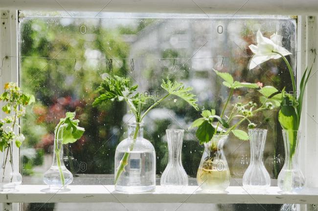 Plants in glass vase growing on window sill