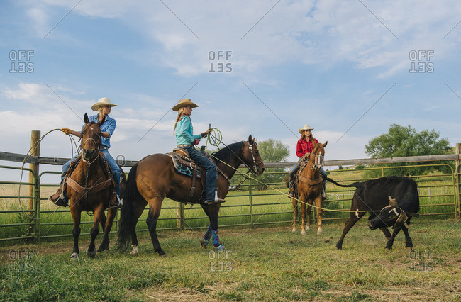 Cowgirls on horseback lassoing cattle on ranch