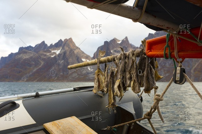 Greenland - September 26, 2016: Fish drying on a fishing boat