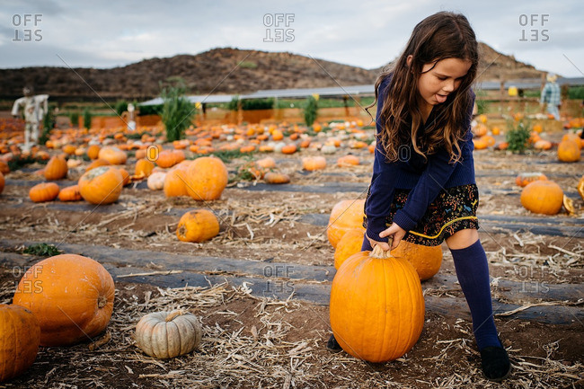 Girl trying to pick up a heavy pumpkin at the pumpkin patch
