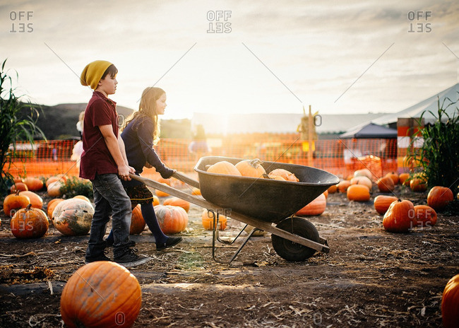 Boy and girl hauling pumpkins in a wheelbarrow together at the pumpkin patch
