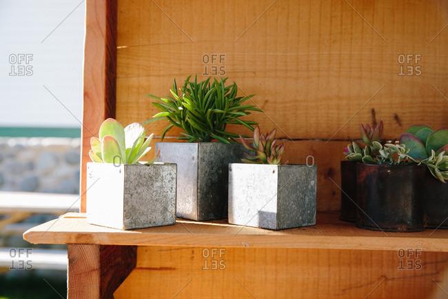 Succulent plants in planter boxes
