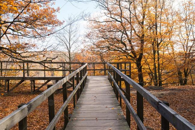 Wooden boardwalk in a hillside forest in fall