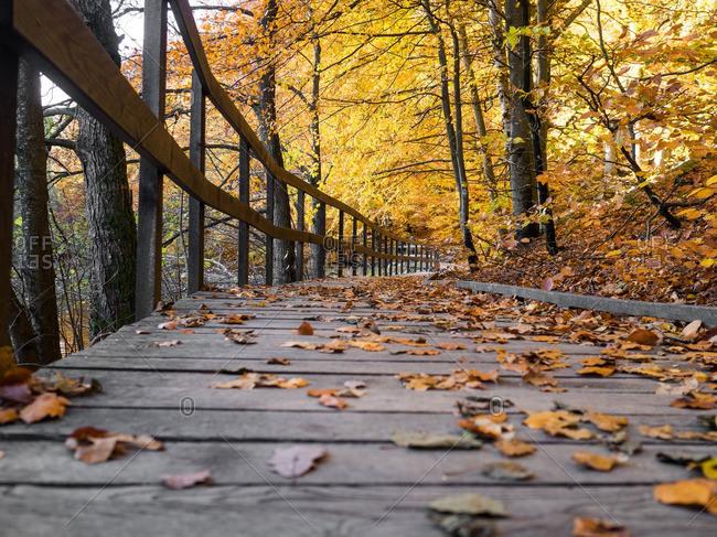Boardwalk covered in fallen leaves in autumn
