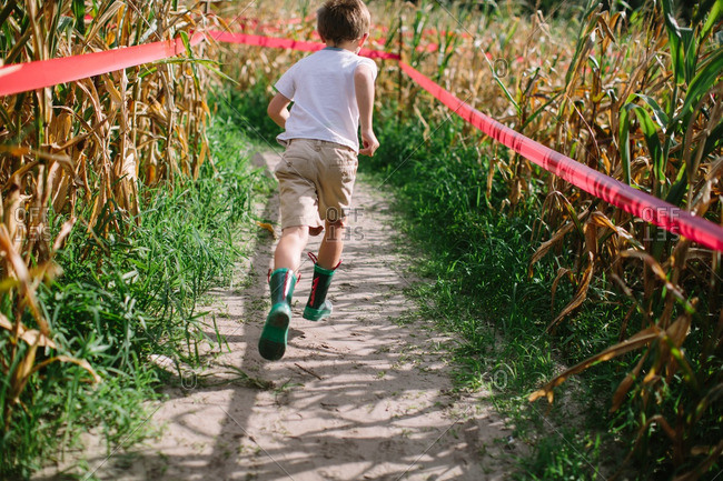 Rear view of boy running through corn maze