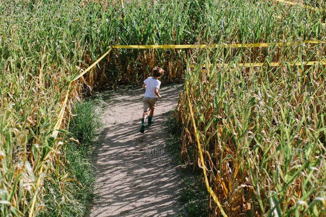 Bird's eye view of a boy running through corn maze