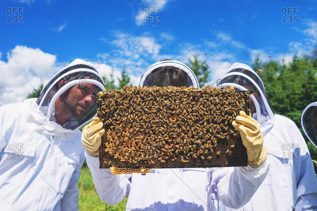 Three adults in bee suits holding a bee hive