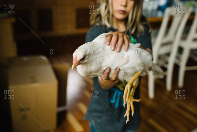 Boy indoors holding a chicken