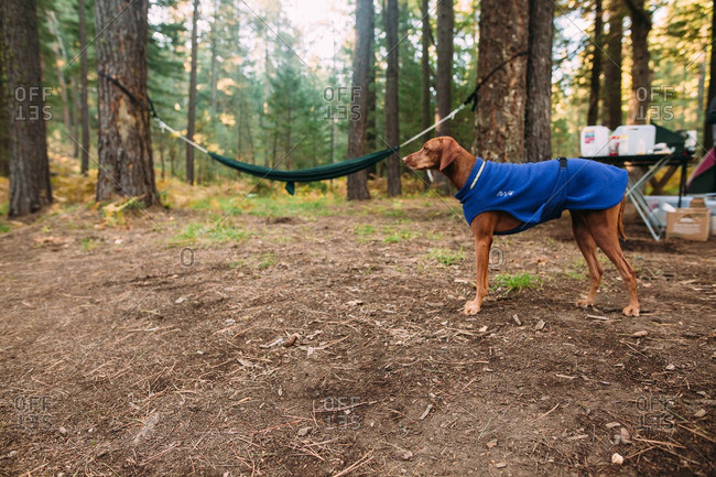 Dog in coat standing in forest