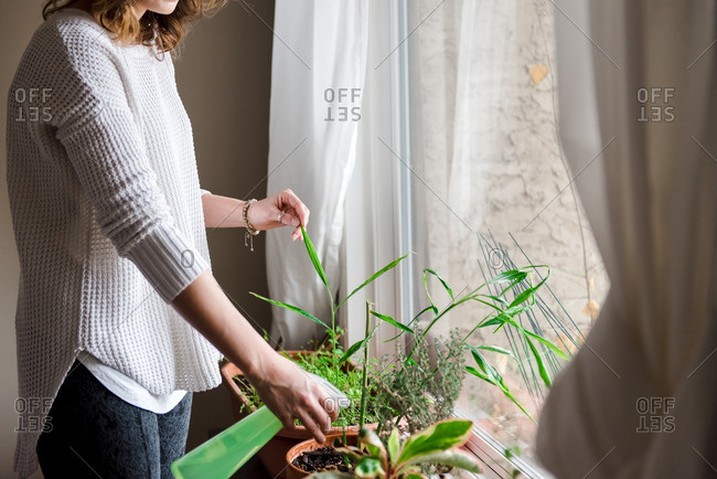 Woman spraying water onto herbs and plants by a window