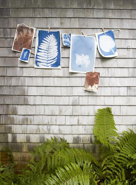 Cyanotypes and sunprints hanging outside