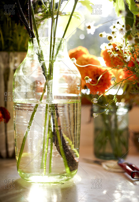 Flowers and herbs in vases by a window