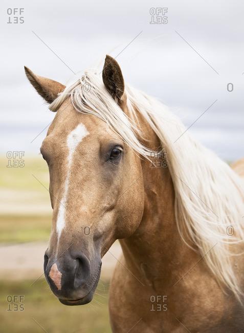 Close up portrait of a horse on the Canadian Prairie.  Big Muddy Badlands, Saskatchewan, Canada.