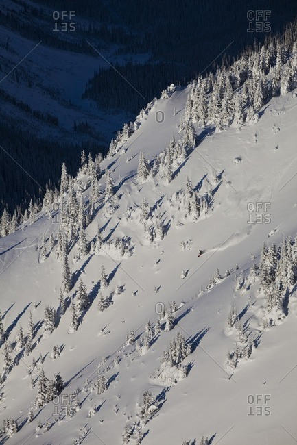 A backcountry snowboarder uses his splitboard to rip a line in the Kicking Horse Backcountry, Golden, British Columbia, Canada