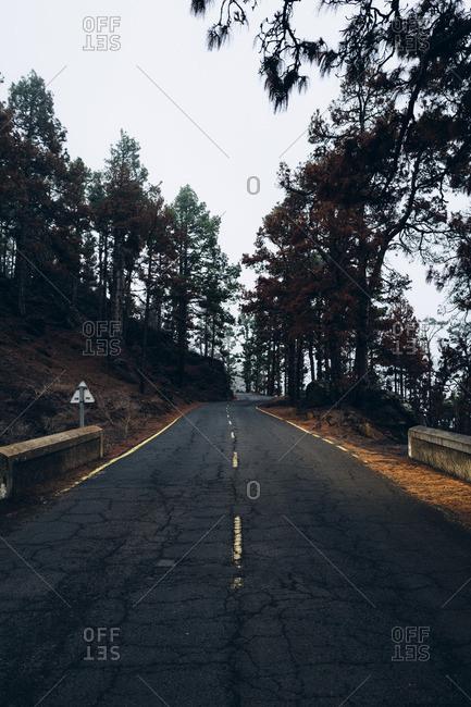Empty two lane highway through a dark Spanish forest