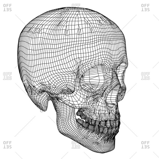 Skull Computer artwork of a wireframe view of a human skull
