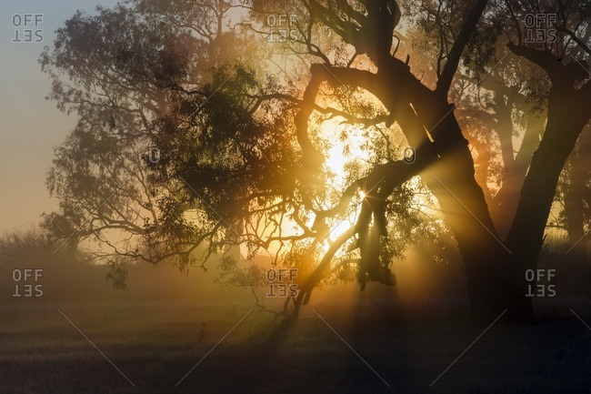 Sunrise with rays forming in a misty morning environment near a lake.