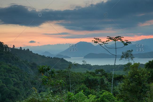 The Atlantic rainforest in Serra do Mar State Park, Ubatuba, Brazil.
