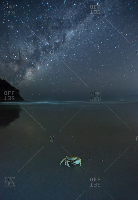 The Milky Way above a crab on a beach.